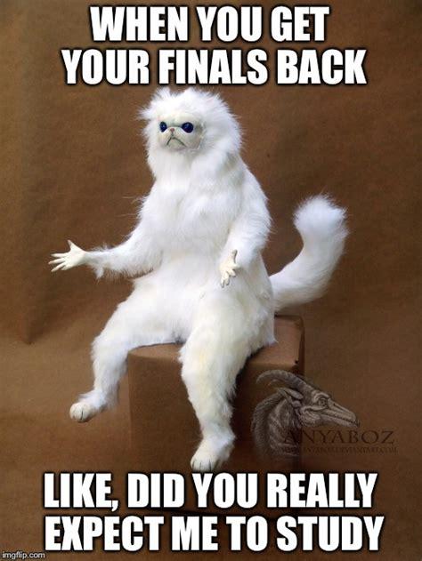 Persian Cat Meme - persian cat room guardian single memes imgflip
