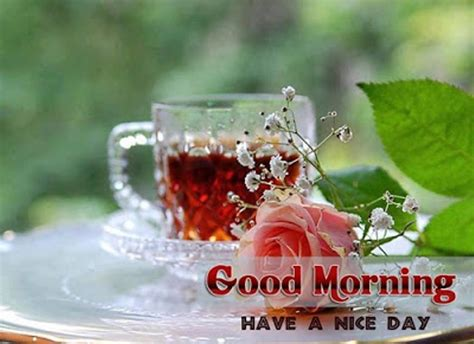 sweet and morning quotes and messages 15 sweet morning quotes and sayings