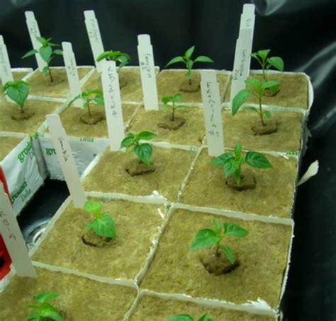 Kain Planel Media Tanam Hidroponik cara menanam tanaman hidroponik bibitbunga