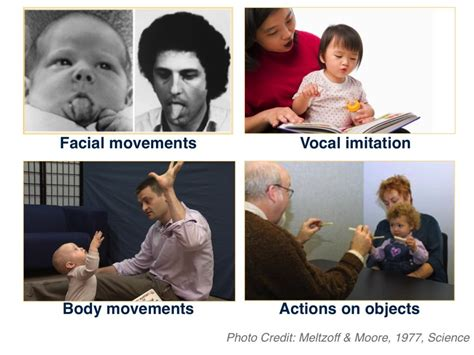 Imitating For by Types Of Imitation Institute For Learning And Brain
