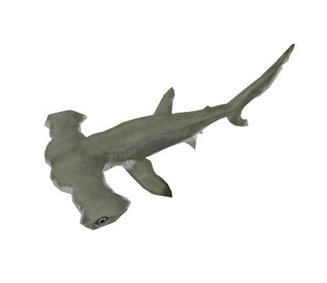 baby shark zoo pc computer zoo tycoon 2 scalloped hammerhead shark