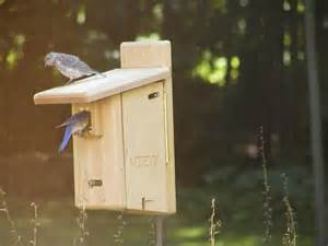 cedar ultimate bluebird house birds choice