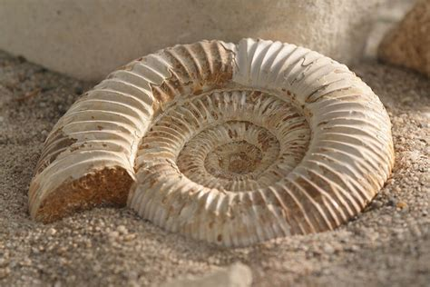 imagenes de fosiles tipos de f 243 siles los diferentes tipos de f 243 siles y sus
