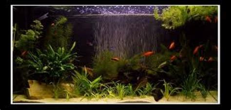 Best Curtain Why Have An Air Pump On A Fish Tank Tropical Fish Site