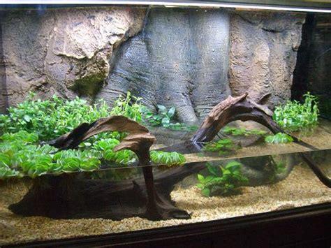 Aquascapeonline We Sell A Wide Selection Of Piranhas Stingrays Cichlids Plecos