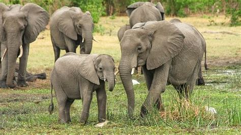 Superior Court Of Connecticut Search Organization Demands Release Personhood Rights Of Three Connecticut Zoo Elephants