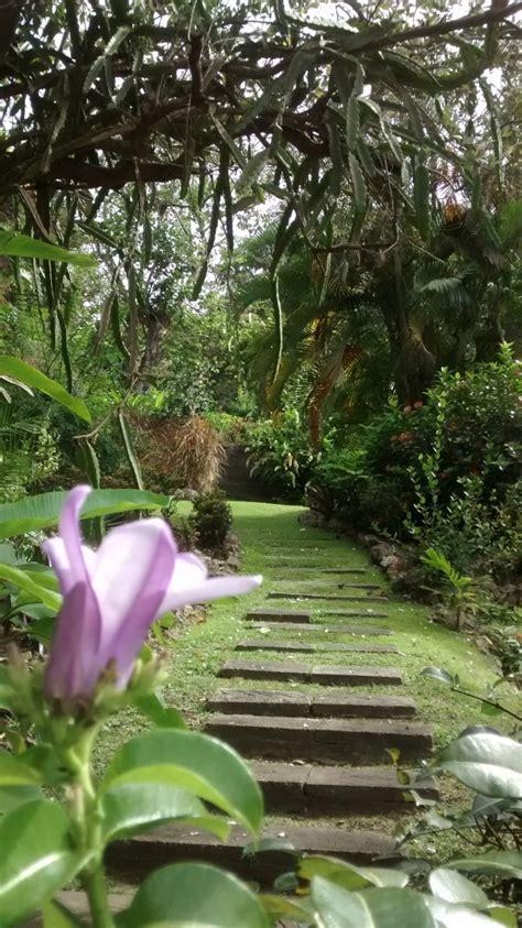 andromeda botanic gardens andromeda botanic gardens barbados volunteer