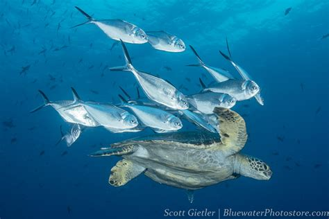 epic dive boats galapagos epic dive trip report feb 2016 bluewater dive