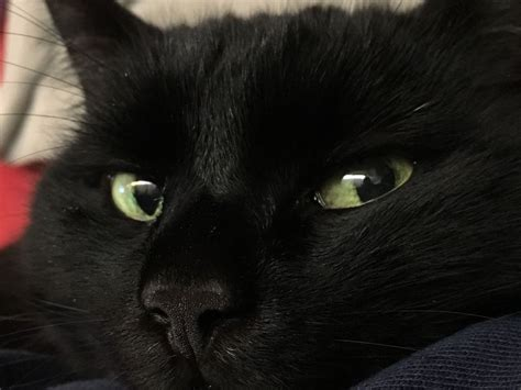 Interesting Facts About Black Cats Black Cat