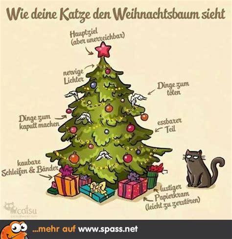 weihnachtsbaum aus katzensicht lustige bilder auf spass