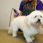 grooming fort collins animal house rescue grooming 13 kuvaa lemmikkien adoptointi 1104 w vine dr