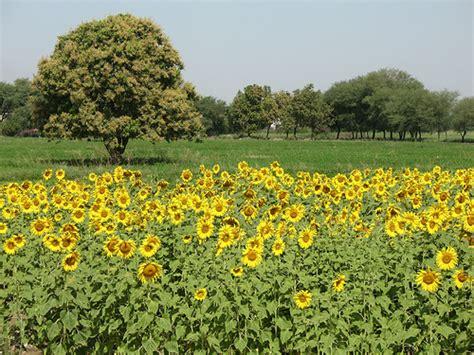 sunflower farm sunflower farm a photo on flickriver