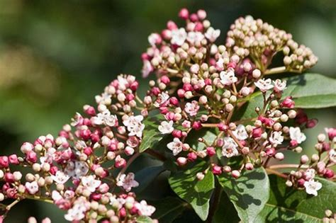graham rice choose 10 of his favourite winter flowering shrubs rhs gardening