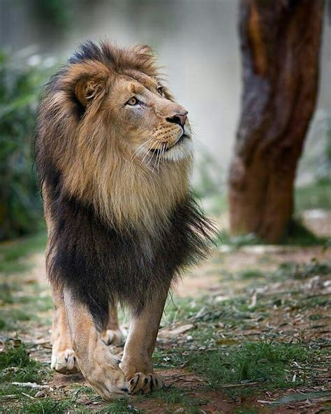 animal pictures best 25 animals photos ideas on cub