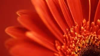 win with flower vista wallpaper flower windows vista wallpapers