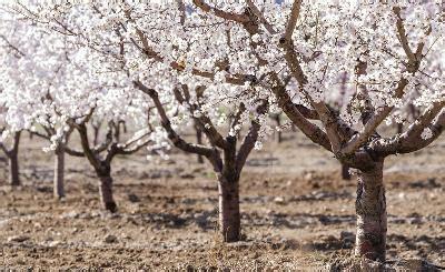 alberi fioriscono in primavera siglato l accordo per una pesca sostenibile nel