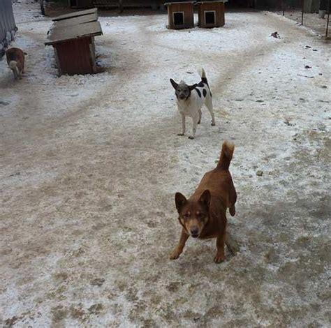 yvo hutte bulgarische stra 223 entier nothilfe e v tierheime