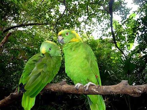 imagenes de guacamayas verdes selvas mexicanas hemisferiomx