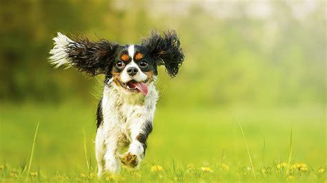 que dogs animales por qu 233 tu perro se vuelve loco de felicidad cuando llegas a casa noticias