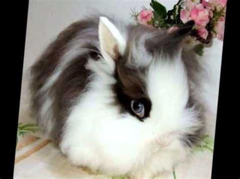 gabbie per coniglietti nani allevamento conigli nani quot la stalla dei conigli quot