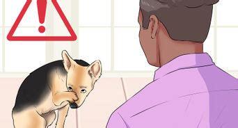 stop golden retriever shedding how to get your golden retriever to shed less 12 steps