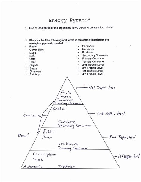 Ecological Pyramids Worksheet Answers ecology worksheets middle school deployday