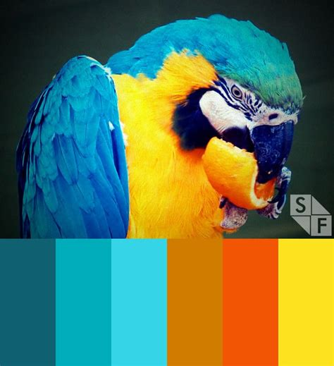 tropical colours 125 best images about tropical color schemes on