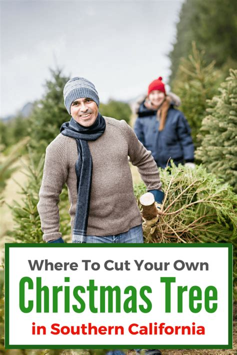 nh magazine best cut your own christmas tree cut your own tree nh auburn fined cut your own tree nh place near milton to get a