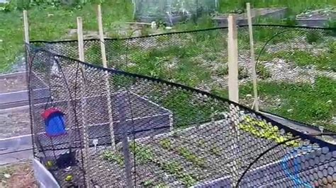 Raised Garden Fence Ideas Fencing Ideas For Raised Bed Gardens