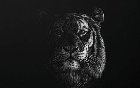 Black White Drawings