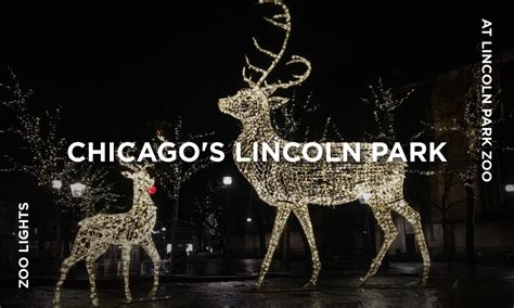 lincoln park zoo lights zoolights at lincoln park zoo the willows hotel