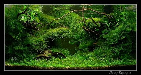java moss aquascape aquatic eden aquascaping aquarium blog