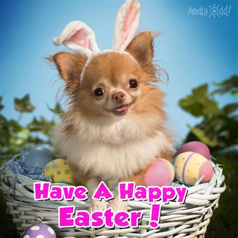 Cute Easter Meme - cute happy easter dog pictures photos and images for