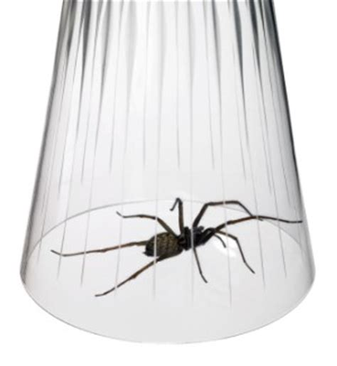 getting rid of spiders thriftyfun