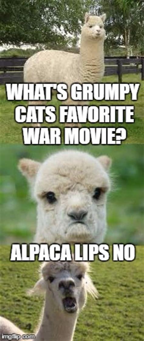 Alpaca Meme Generator - alpaca bad pun imgflip