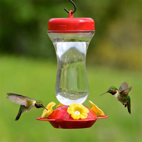 duncraft com 16 oz glass top fill hummingbird feeder