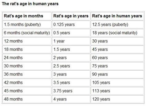 age to human age rat to human age conversion chart rats expectancies are not that due to
