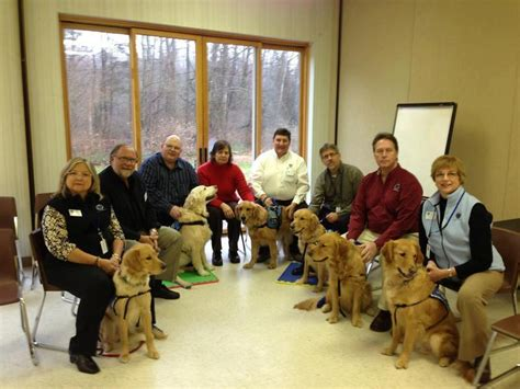 golden retrievers newtown ct golden retrievers sent to comfort newtown ct survivors baxterboo