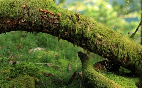 mossy log full hd wallpaper  background image