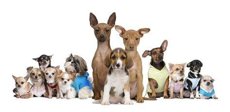 Small Animals Free To Home Wie Viele Hunderassen Gibt Es Die Komplette 220 Bersicht