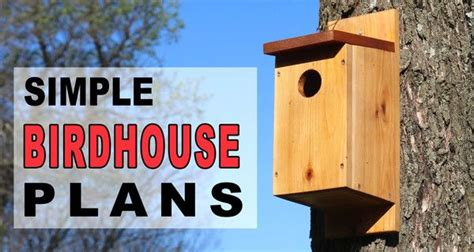 birdhouse plans  simple steps  pictures
