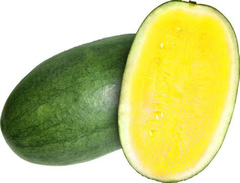 Semangka Baby 135 manfaat dan khasiat semangka kuning untuk kesehatan