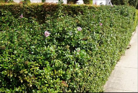 Landscaping Photos Cheap Hedging Amp Screening Flowers Amp Bedding Plants Cavan