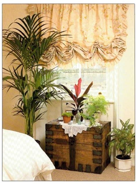 plants for bedroom best plants for a bedroom