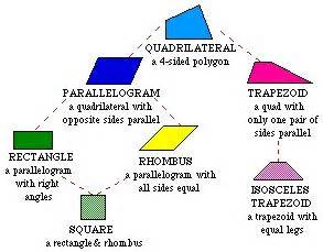 quadrilaterals flowchart quadrilateral family tree math measurement geometry
