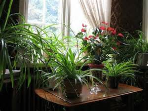 beautiful indoor plants beautiful indoor plants fulfill the role of decoration