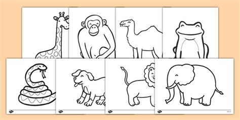dear zoo printable animals dear zoo colouring sheets pinteres