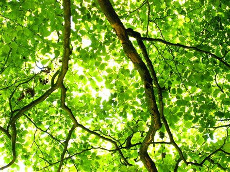 green tree by bruce denney green tree light openphoto