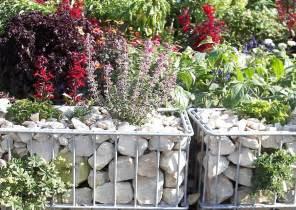 bepflanzte gabionen