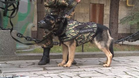 armour dogs russia unveils armour for dogs after of in attacks daily
